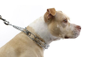 pethealth-leashes